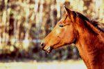 Leamington Raceway Horses in Quarantine Crippling New Season